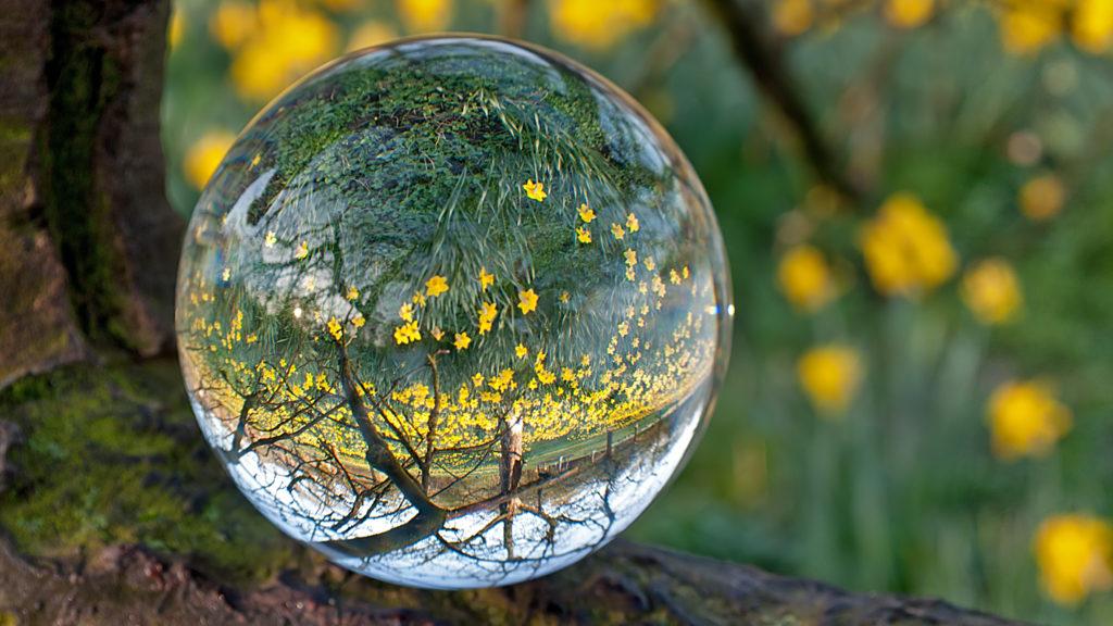 Auf dem Bild ist eine Glaskugel umgeben von Blumen, Wiese und Bäumen. In dieser Glaskugel spiegelt sich die Umgebung als Symbol für die Abgeschnittenheit und die Ressourcen des Traumas.